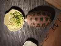 乌龟陆龟一只(带所有家当)