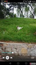 小狗在易县老火车站丢失