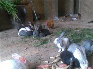 宇龙兔业欢迎各位光临