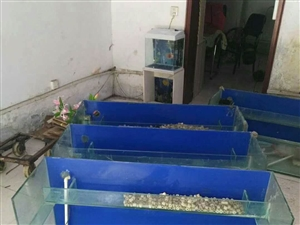 便宜威尼斯人注册多层鱼缸