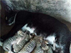 小猫待送爱猫人士收养