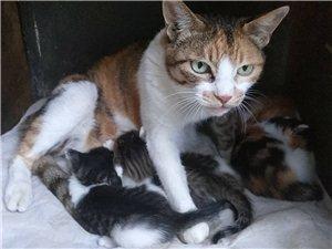 满月小猫免费赠送