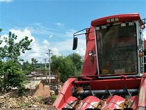 出售两年玉米直收。车开走就干活