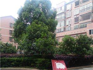 【华一地产】正龙花园毛坯房出售绝佳楼层南北通透