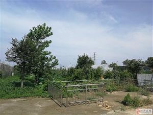 江苏省泗洪县80亩生态园转让