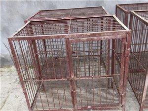 出售大狗笼和油桶