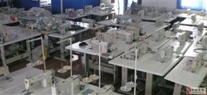低价出售电动平缝机(精工牌)100台