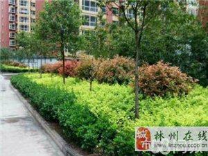 长安丹桂3室2厅毛坯南北通透房