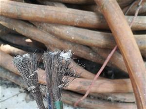 出售工厂用的大电缆