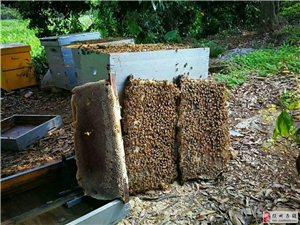 養蜂場自產蜂蜜出售