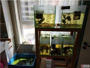 孔雀魚、繁殖缸及過濾等設備