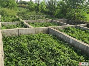 地皮低价对外出售10米x14.7米18.8万元