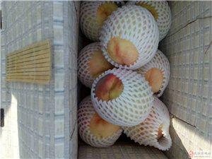 售卖绿色无公害水蜜桃,现吃现摘