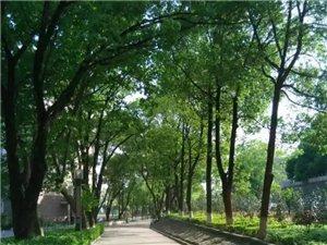 安庆工业学校招生