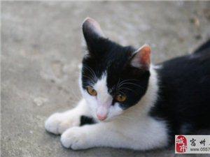 3个月的小猫送养