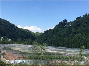 四川先双生态青蛙养殖基地13714159995