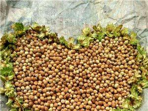 出售自己家的大榛子出售20元一斤