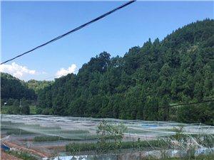 四川青蛙养殖基地