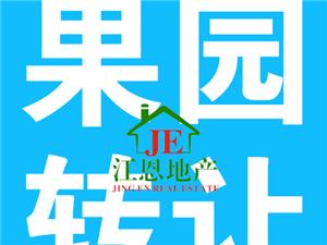 (果园转让)位于东江占地48亩售价52.5万元