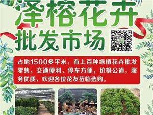 泽荣花卉批发中心批发零售摆租各种花卉绿植