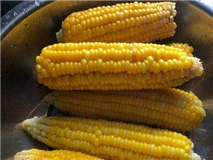 长阳黄女士家现有少量高山甜玉米出售