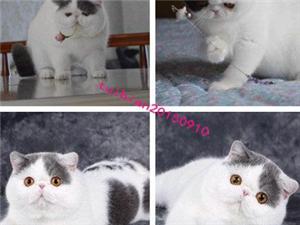 加菲貓雙證