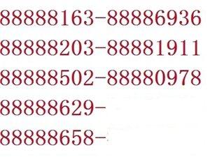 88888-687固话转让