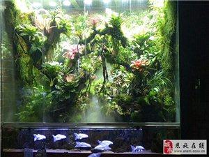 七秒水族,水族景觀設計,水草缸,水陸缸,雨林。