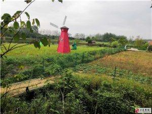 武漢特色農家樂樂農湖畔生態園總有一個是你喜歡的