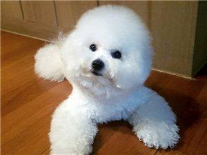 出国工作了找个爱犬人士免费送心爱的狗狗