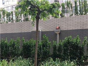 南山豪庭1楼140平带阳光房双车位毛坯228万