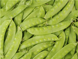 建水的荷兰豆每年11月份大量上市了,欢迎大家来批发