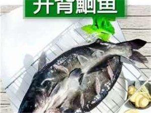 大量出售開背鮰魚冷凍鮰魚!烤魚店專供