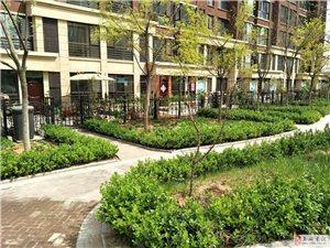 枫林绿洲一层小院2室1厅1卫62万元