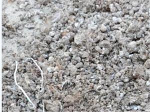 常年大量出售優質干鵪鶉糞