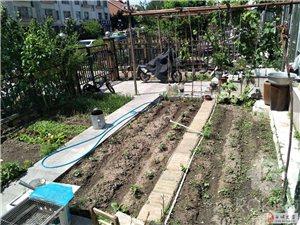 21684吉鹤苑小区黄金一楼带小花园可贷款