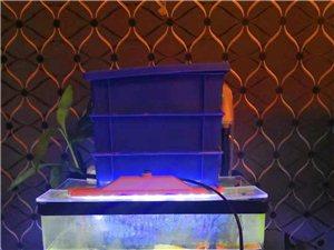 出售森森迷你客厅小型鱼缸