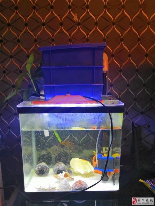 出售森森迷你客廳小型魚缸