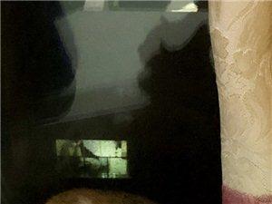 可愛粘人三花貓領養