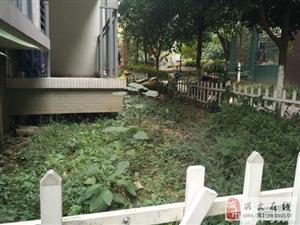 龙腾锦程带花园3室2厅2卫45.8万元