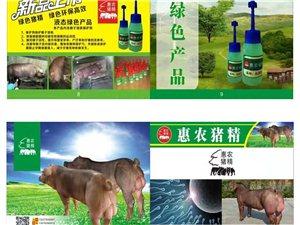 惠农兽药店供应良种猪精