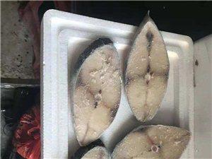 白马井马鲛鱼,深海马鲛鱼,送礼好产品,儋州地区配送