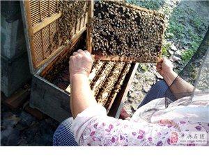 轉讓駐馬店平輿縣三里橋自家養殖蜜蜂