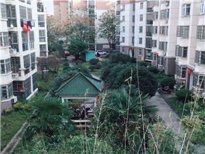 繁华地段交通便利桐乐家园两房好楼层户型好赠送大平台
