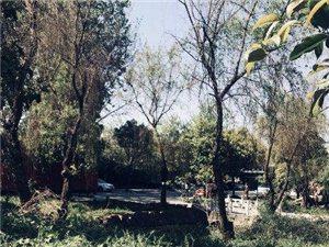 江宁湖山路232平方米厂房出租,附近交通方便,可分割