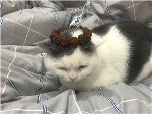 宠物猫求领养(给个猫粮钱)