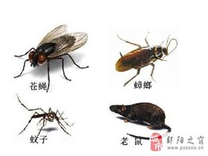 您是否也在寻找一家更专业的灭四害、白蚁的公司?