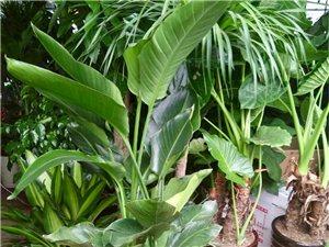 出售花花草草盆栽等室内室外各种大小植物有意者请联系!