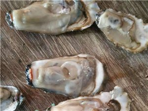 渤海湾野生 生蚝牡蛎 大量出售有需要的联系