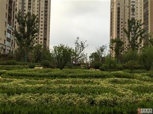 尚诚中介:锦绣福邸3室2厅142平132万满2年